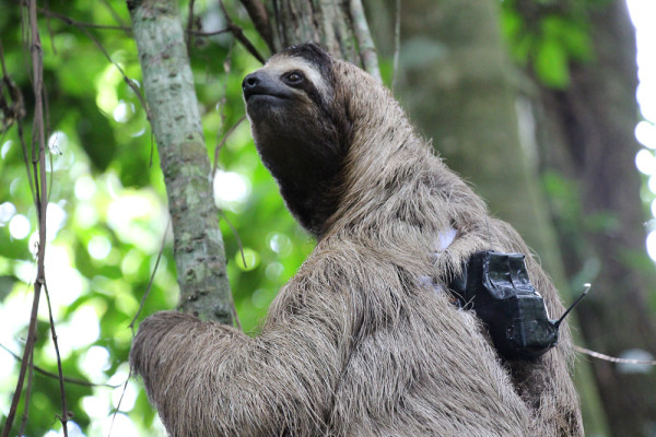 Sloth Back Pack