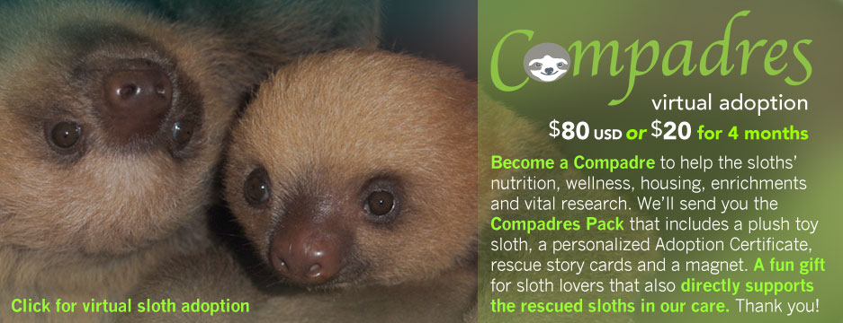 Virtually adopt the Sanctuary sloths! A great gift for a sloth lover … like you!