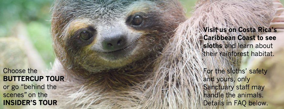 "Visit us on Costa Rica's South Caribbean Coast to see sloths and learn about their rainforest habitat. Choose either the Buttercup Tour or ""behind the scenes"" Insider's Tour. No touching or holding sloths, for their safety and yours."
