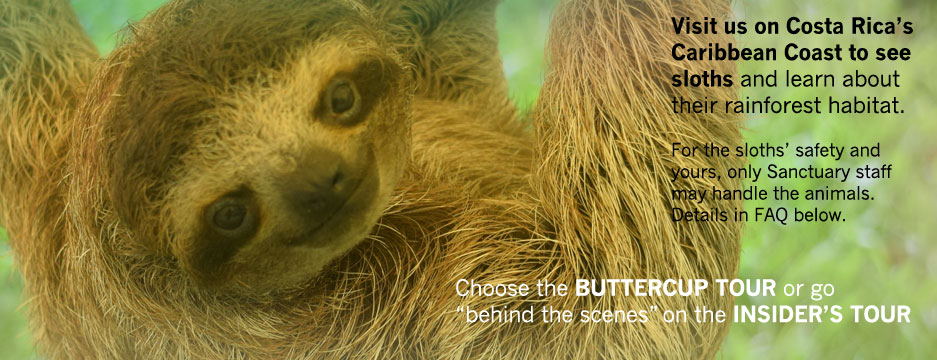 Visit us on Costa Rica's Caribbean Coast and take an educational tour to learn all about sloths!