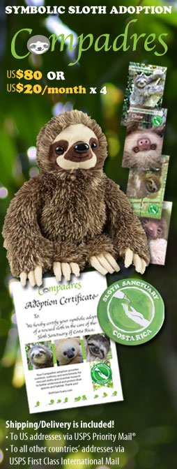 Compadres Symbolic Sloth Adoption! US$80 or four $20 monthly installments. We will send you the Compadres Adoption Pack that includes a plush sloth, a magnet, four rescue story cards and a personalized adoption certificate. Shipping/delivery is included in the donation. Thank you!
