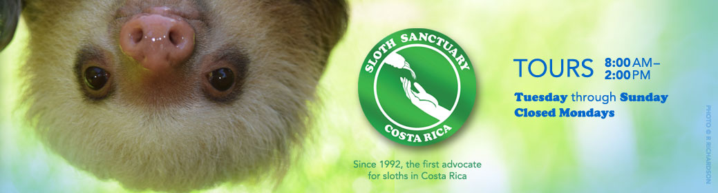 Sloth Sanctuary of Costa Rica header image