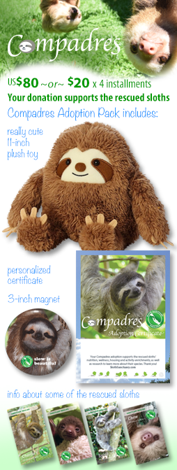 Compadres virtual adoption! US$80 or four $20 monthly installments. Adoption pack includes 11-inch plush toy, personalized adoption certificate, 3-inch magnet and info cards about some of the sloths that we've rescued. Your donation supports the rescued sloths in our care. Thank you for your support!