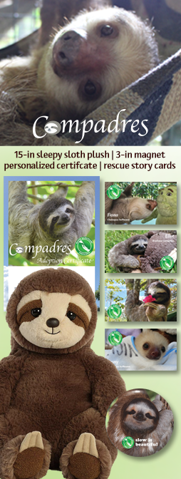 Thank you for supporting the sloths! Along with our gratitude, you will receive the Compadres Adoption Pack that includes a sleepy plush sloth, a personalized certificate, a magnet and four cards with stories about our rescued sloths.