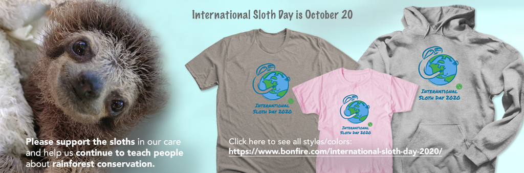 Please support the sloths in our care and help us continue to educate people about rainforest conservation. Please click to purchase an International Sloth Day 2020 tee or hoodie!