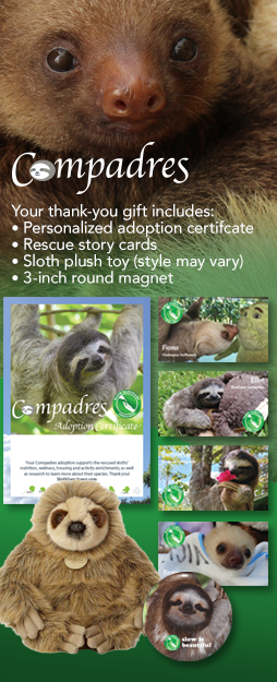 When you donate to support the sloths, your thank-you gift will include a personalized adoption certificate, rescue story cards, a sloth plush toy (style may vary) and a 3-inch round magnet. Thank you!