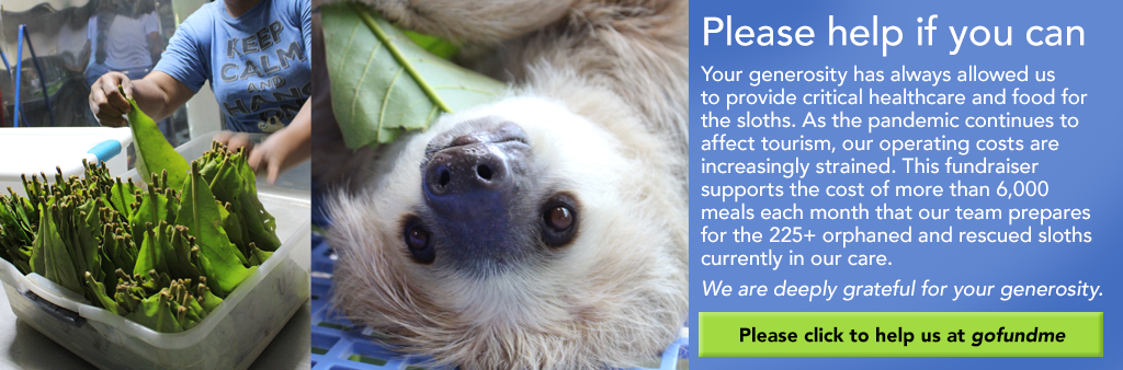 Please help if you can Your generosity has always allowed us to provide critical healthcare and food for the sloths. As the pandemic continues to affect tourism, our operating costs are increasingly strained. This fundraiser supports the cost of more than 6,000 meals each month that our team prepares for the 225+ orphaned and rescued sloths currently in our care. We are deeply grateful for your generosity.